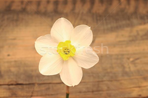 Bright flower on wooden background  Stock photo © inxti