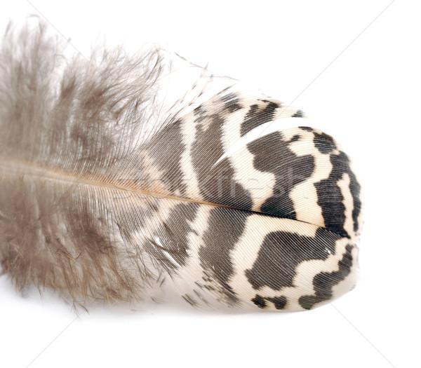 bird feather Stock photo © inxti