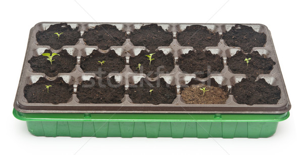 Vert semis croissant sur sol printemps Photo stock © inxti