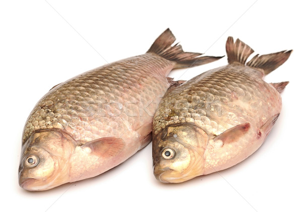 Crucian carp isolated on white background Stock photo © inxti