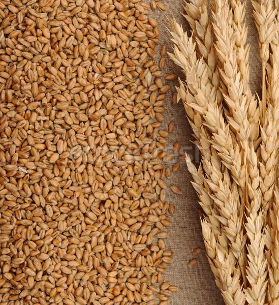 Wheat on sacking background  Stock photo © inxti