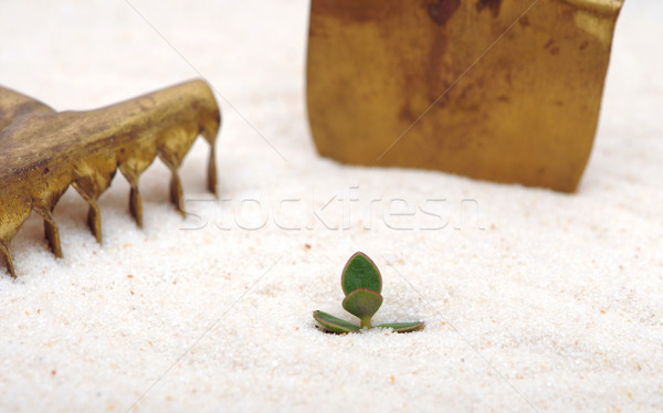 single young plant sprouting from of sand Stock photo © inxti