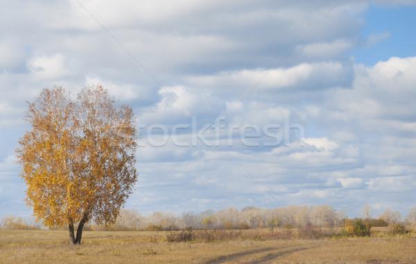 Eenzaam najaar boom wolken Blauw horizon Stockfoto © inxti