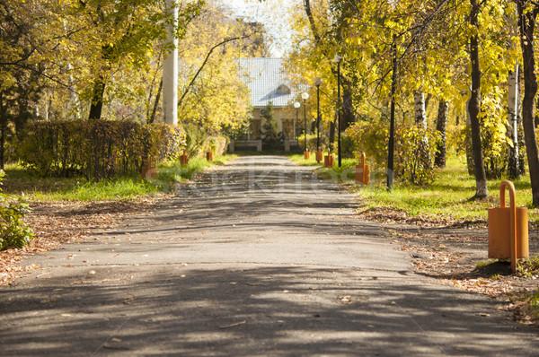 осень декораций аллеи парка золото цвета Сток-фото © inxti