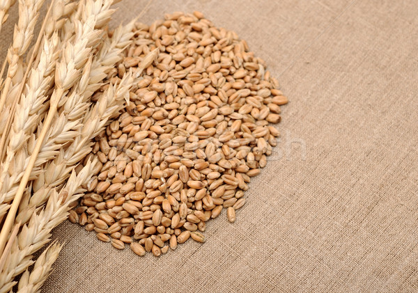 Wheat ears border on burlap background  Stock photo © inxti