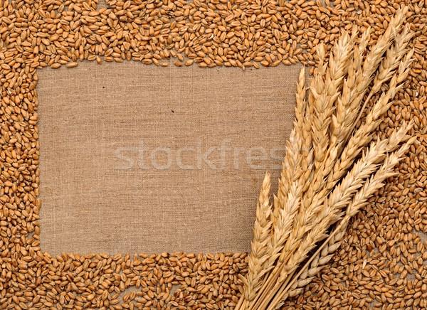 wheat ears on sacking Stock photo © inxti