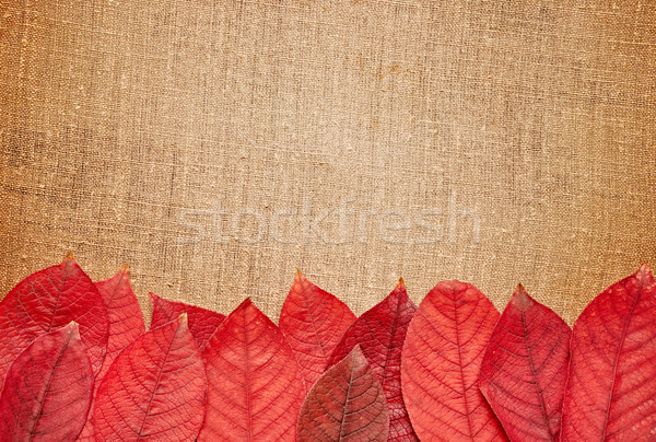 Toile de jute espace de copie nature art rouge Photo stock © inxti