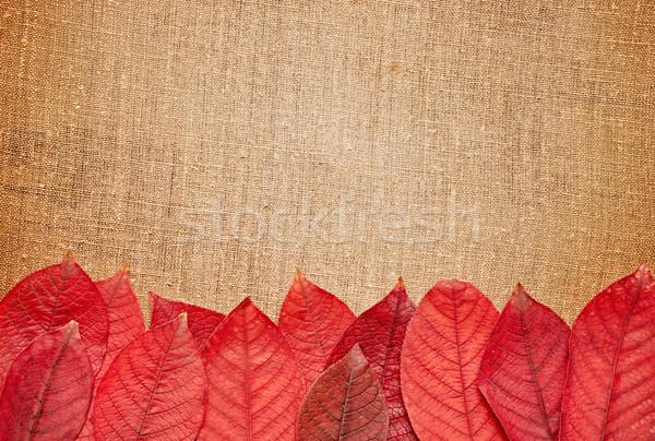 őszi levelek zsákvászon copy space természet művészet piros Stock fotó © inxti