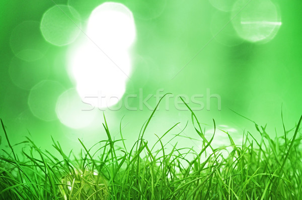 natural green background with selective focus  Stock photo © inxti