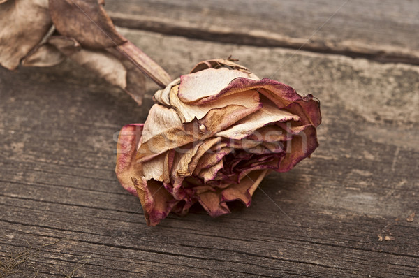 Stock fotó: Aszalt · rózsa · öreg · fából · készült · klasszikus · stílus