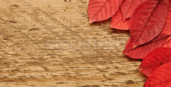 Autumn leaves over wooden background. Stock photo © inxti