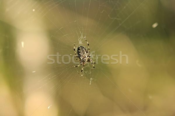 Dark black spider in a web Stock photo © inxti