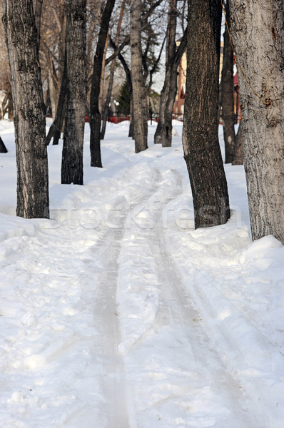 View of ski track between snowy trees in the depth of winter for Stock photo © inxti
