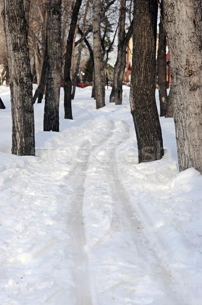 Vista esquí tema árboles invierno forestales Foto stock © inxti