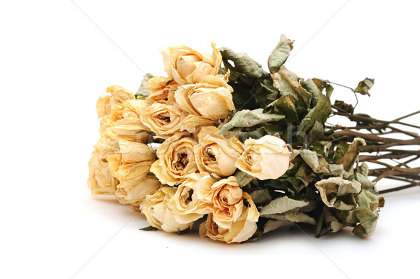 dry roses on a white background  Stock photo © inxti