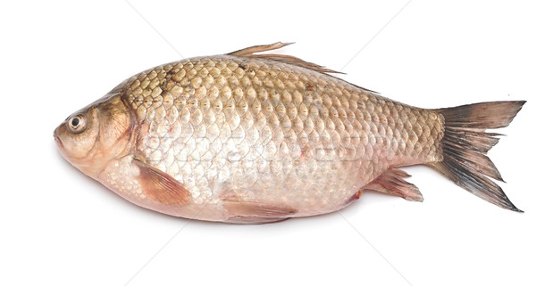 Crucian carp fish isolated on white background Stock photo © inxti