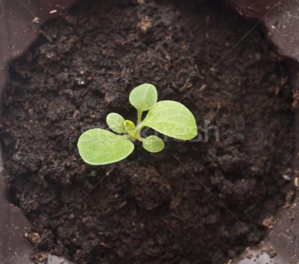工場 成長 土壌 開始 自然 ケア ストックフォト © inxti