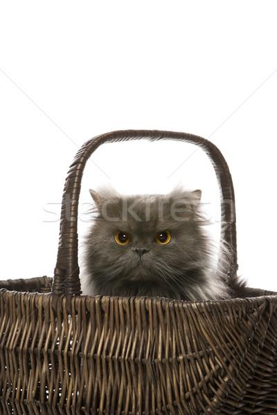 グレー ペルシャ猫 バスケット 座って 猫 髪 ストックフォト © iofoto