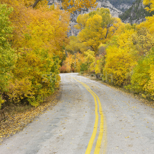 Road with Aspens in Fall. Stock photo © iofoto
