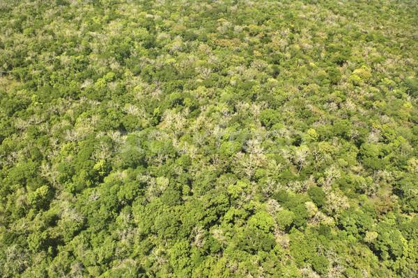Dense forest. Stock photo © iofoto