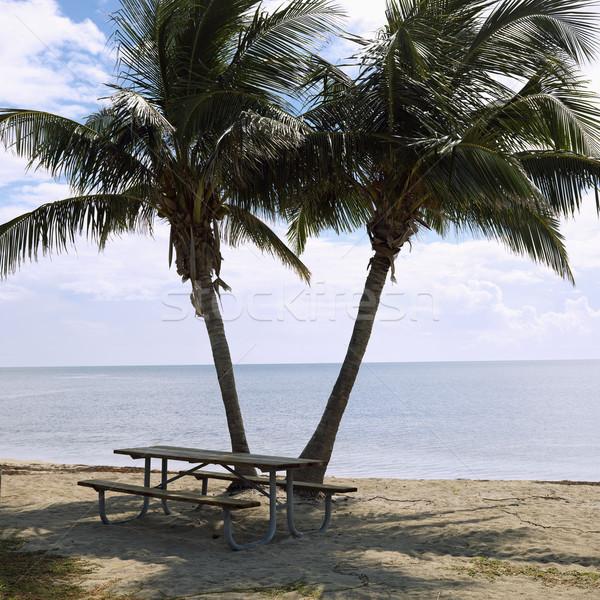 Picknicktafel palmbomen paar strand Florida sleutels Stockfoto © iofoto