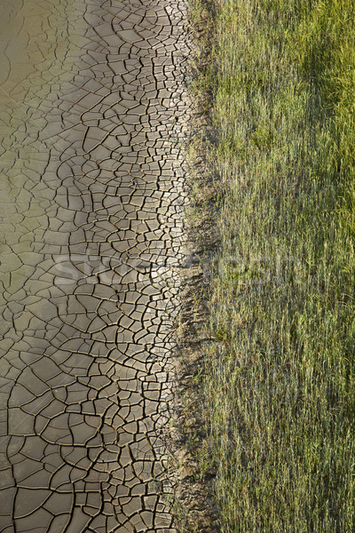 Cracked mud with grasses. Stock photo © iofoto