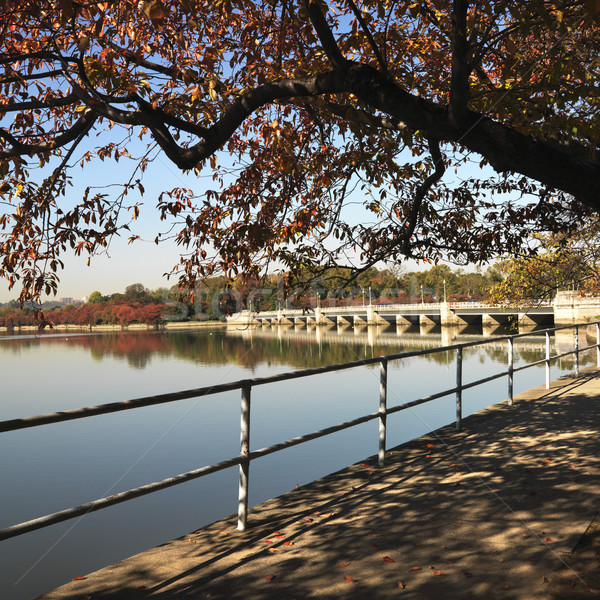 Washington DC drzewo USA wody miasta most Zdjęcia stock © iofoto