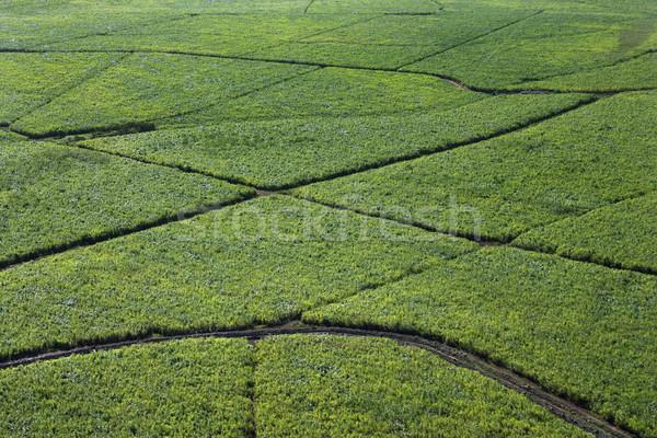 Irrigated crops. Stock photo © iofoto