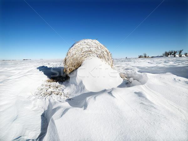 Hay bale in snow. Stock photo © iofoto