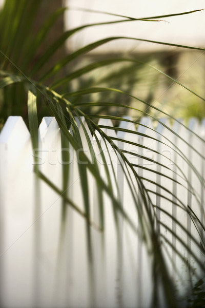 Palm leaf over picket fence. Stock photo © iofoto