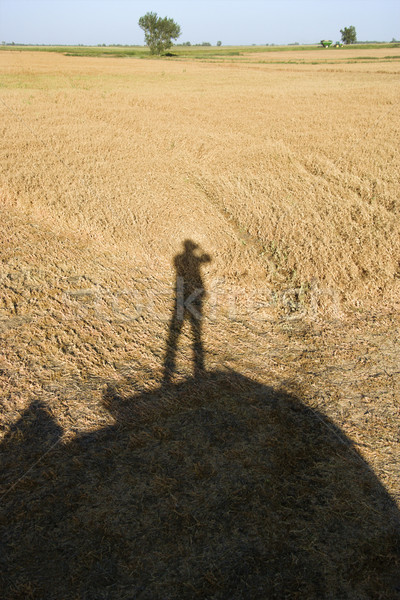Human shadow on crop. Stock photo © iofoto