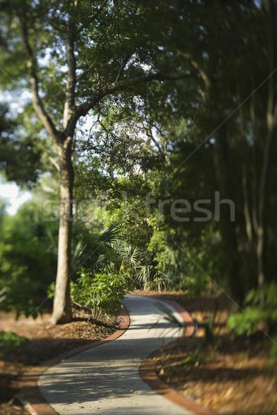 Winding footpath trail. Stock photo © iofoto