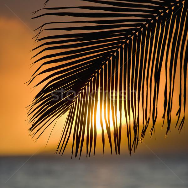 Palm frond sunset. Stock photo © iofoto