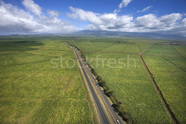 Road through farmland. Stock photo © iofoto