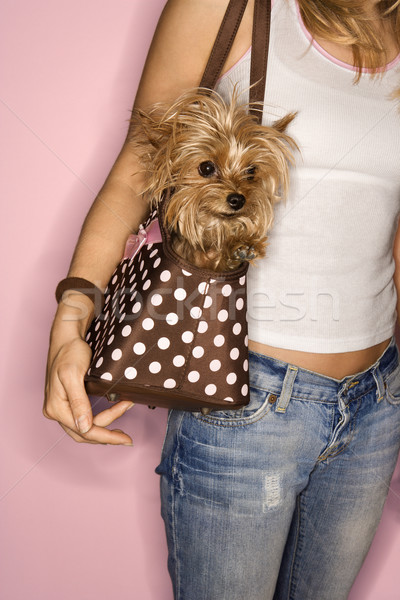 Woman with dog in bag. Stock photo © iofoto