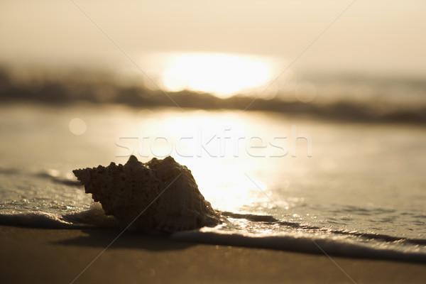 Seashell at sunset. Stock photo © iofoto
