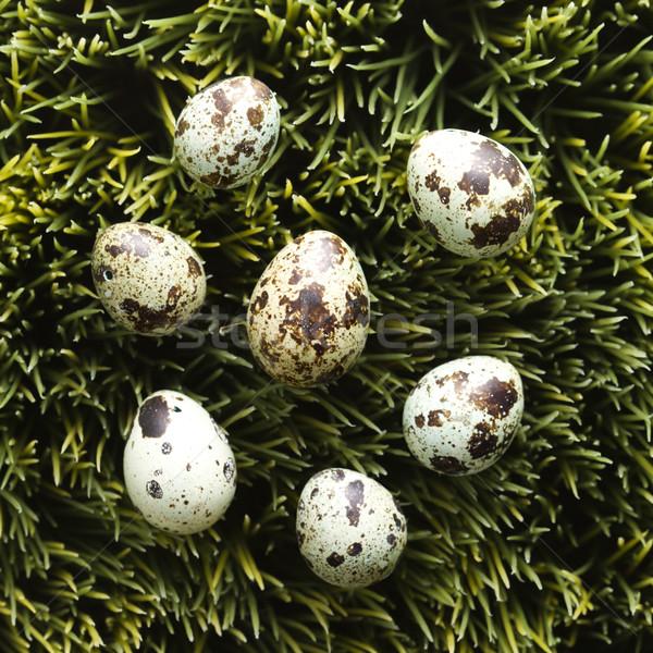 Eggs on grass. Stock photo © iofoto