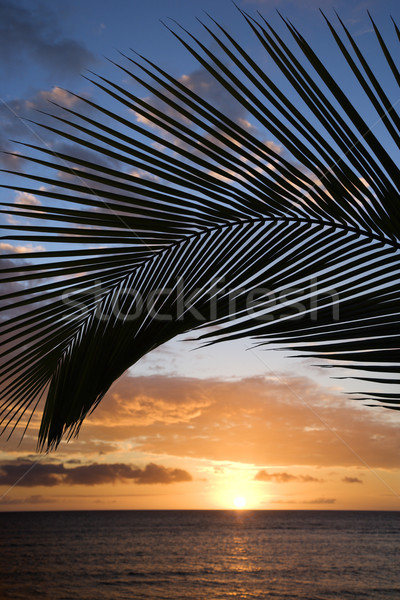 Maui sunset with palm tree. Stock photo © iofoto