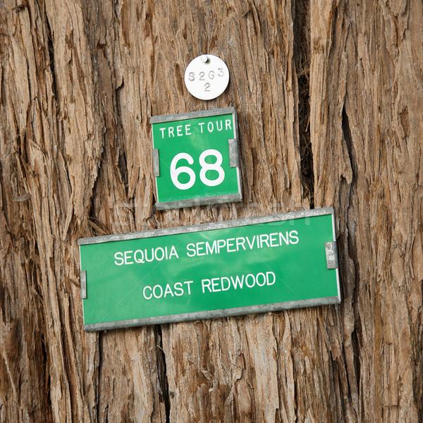 Drzewo podpisania kory California tle Zdjęcia stock © iofoto