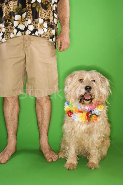 Man with dog wearing lei. Stock photo © iofoto