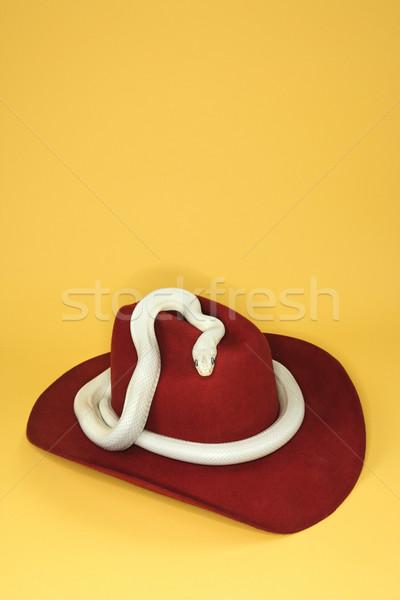 Texas Rat Snake on cowboy hat. Stock photo © iofoto