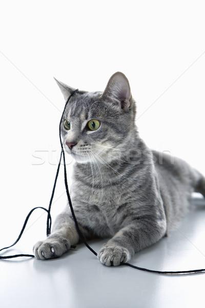 Stok fotoğraf: Gri · kedi · oynama · dizi · gri · çizgili · kedi