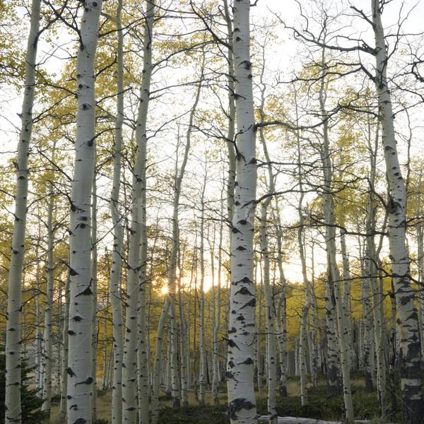 Fák ősz szín Utah tájkép tér Stock fotó © iofoto