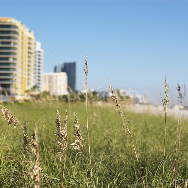 Stock fotó: Miami · tengerpart · fű · épületek · Florida · USA