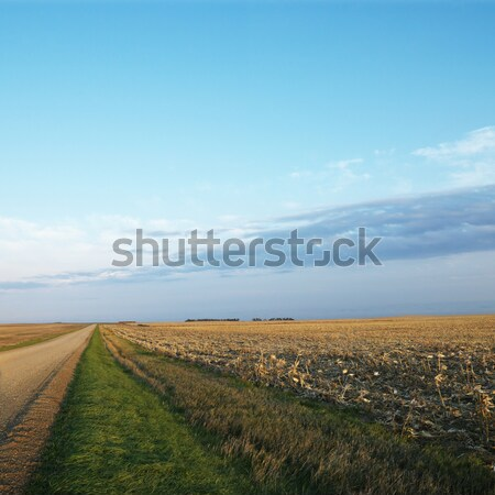Földút kukoricamező halott vidéki Dél-Dakota felhők Stock fotó © iofoto