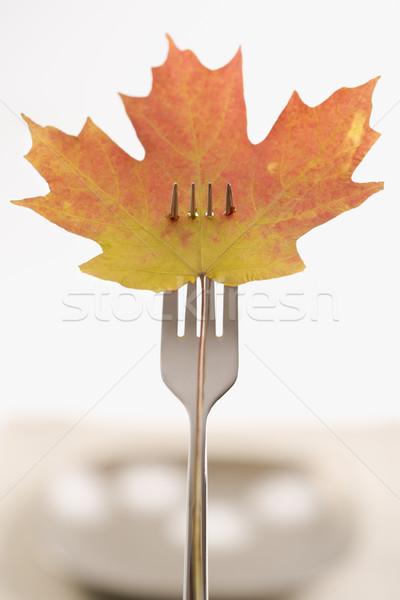 Fall harvest concept. Stock photo © iofoto