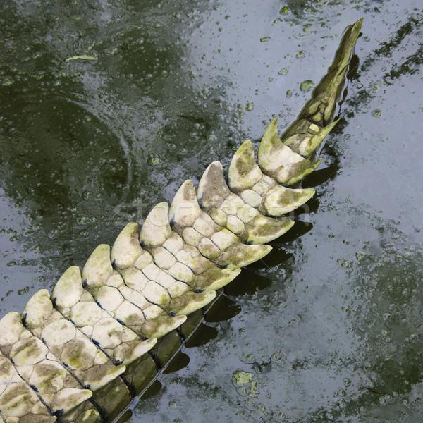 Krokodil farok víz Ausztrália textúra állat Stock fotó © iofoto