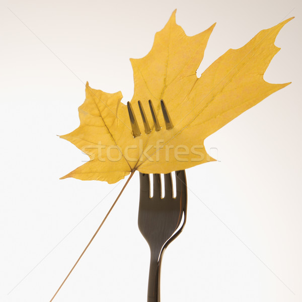 Maple leaf on fork. Stock photo © iofoto