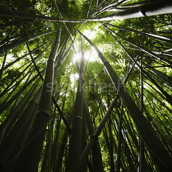 Bambu floresta ver natureza verde Foto stock © iofoto