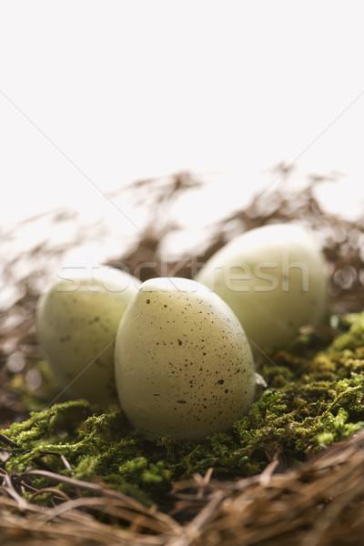Eggs in nest. Stock photo © iofoto